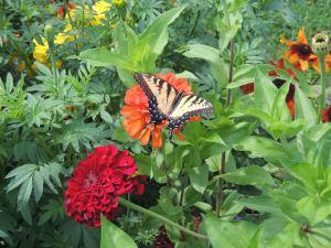 2561-flowerbutterfly